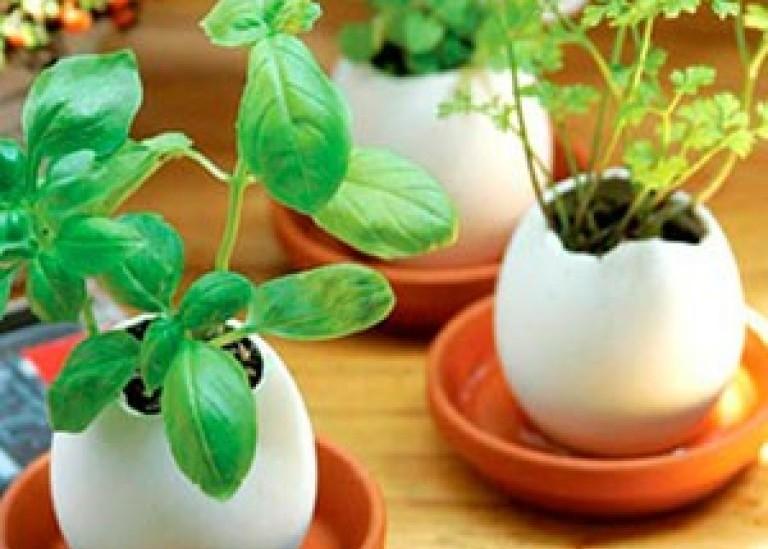 Сажаем рассаду в яичной скорлупе